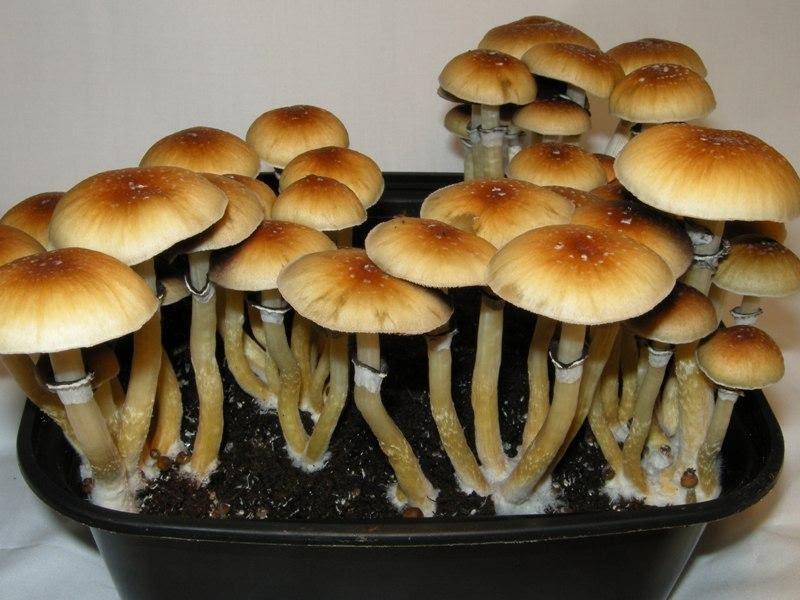 Types of Mushrooms
